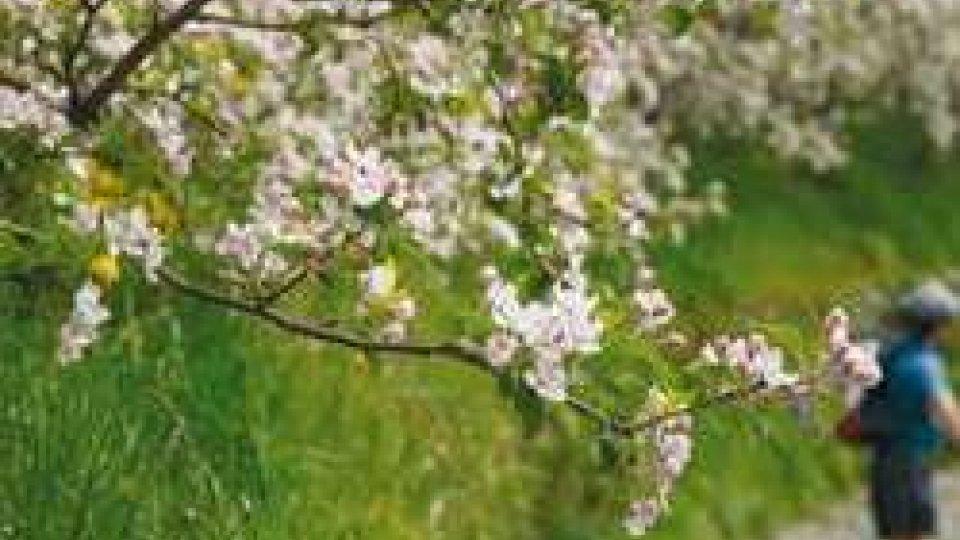 Alberi in fiore, marzo 2017