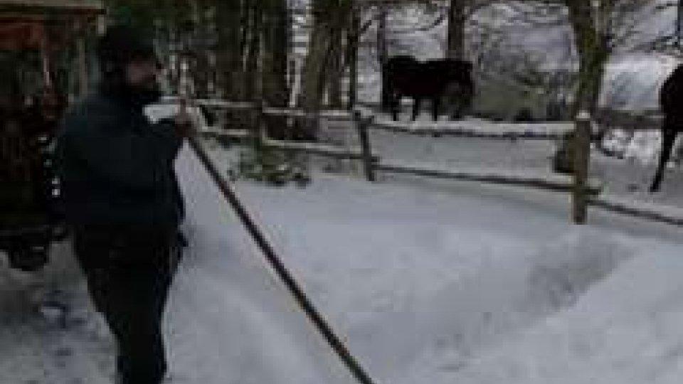 Il bestiameNeve sul Centro Italia: in ginocchio le zone terremotate
