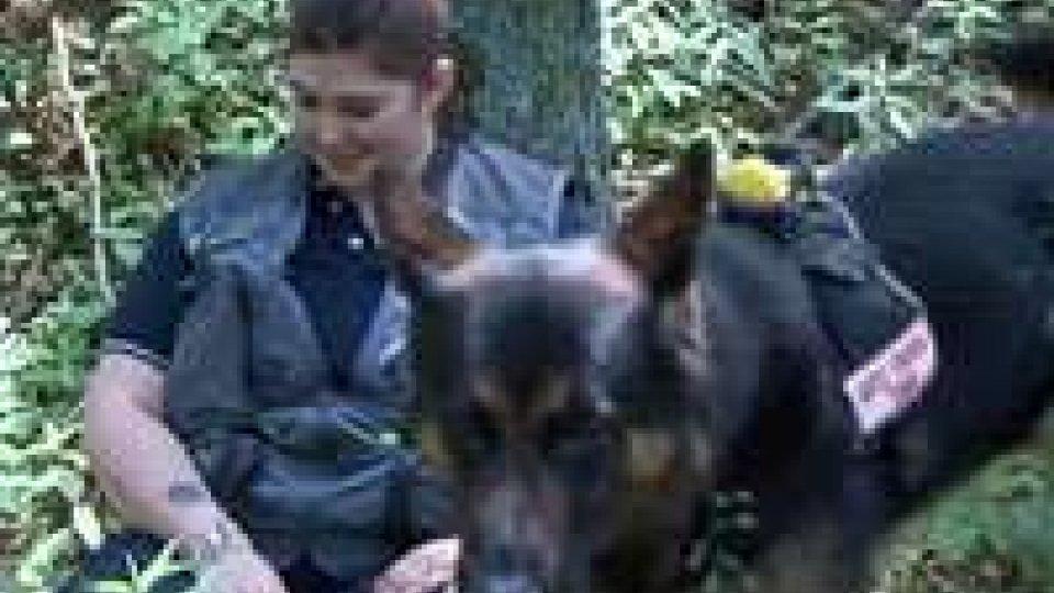 Prove di Protezione civile: sul Fumaiolo i cani 'salvavita'Prove di Protezione civile: sul Fumaiolo i cani 'salvavita'