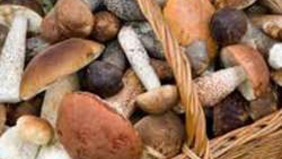 Intossicazione da funghi per una 50enne riminese: già 8 i casi nel 2016