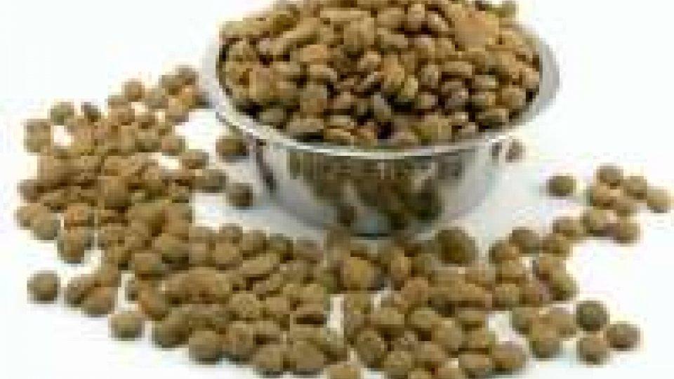 San Marino - Colletta alimentare per gatti e cani randagi