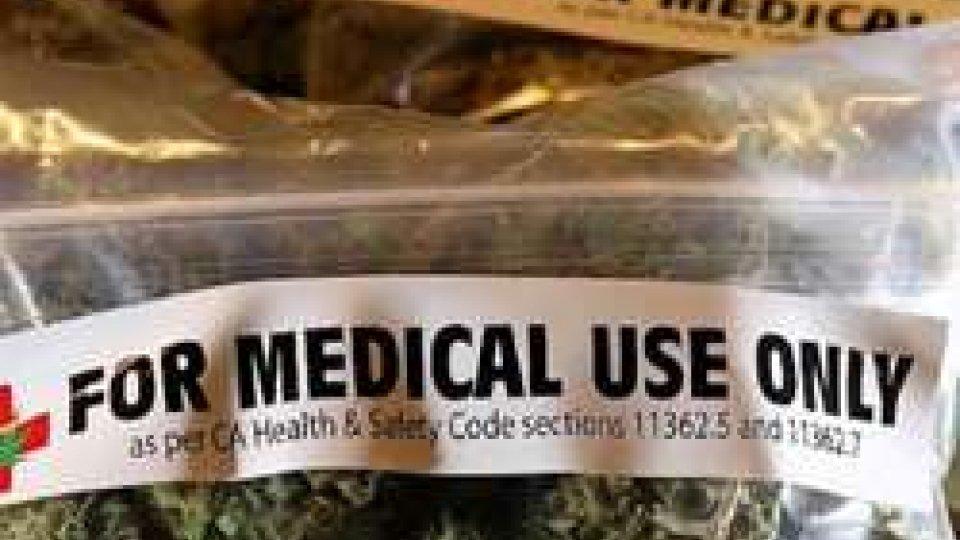 Cannabis per uso terapeutico: per Mussoni possibili benefici per le entrate