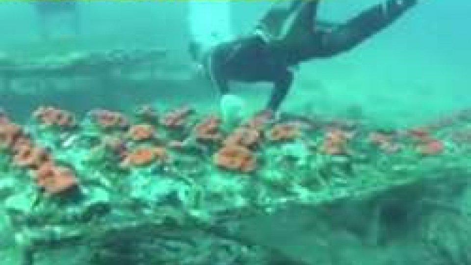 """il servizio di StrisciaISS: """"L'azienda sammarinese ha ordinato solo coralli regolarmente autorizzati"""""""