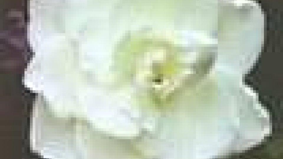 Sclerosi Multipla: acquista una Gardenia