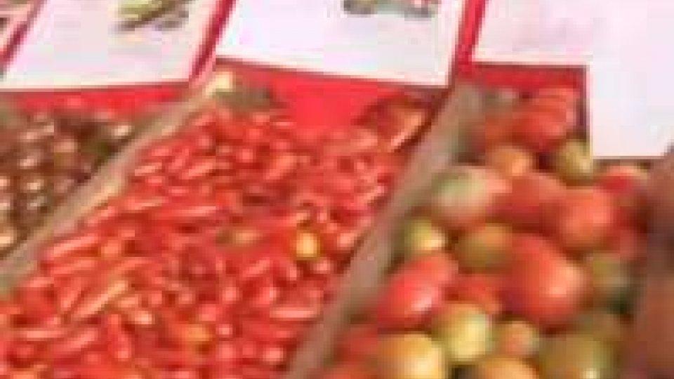 L'isola del gusto, cucina italiana, a Covignano di RiminiL'isola del gusto, cucina italiana, a Covignano di Rimini