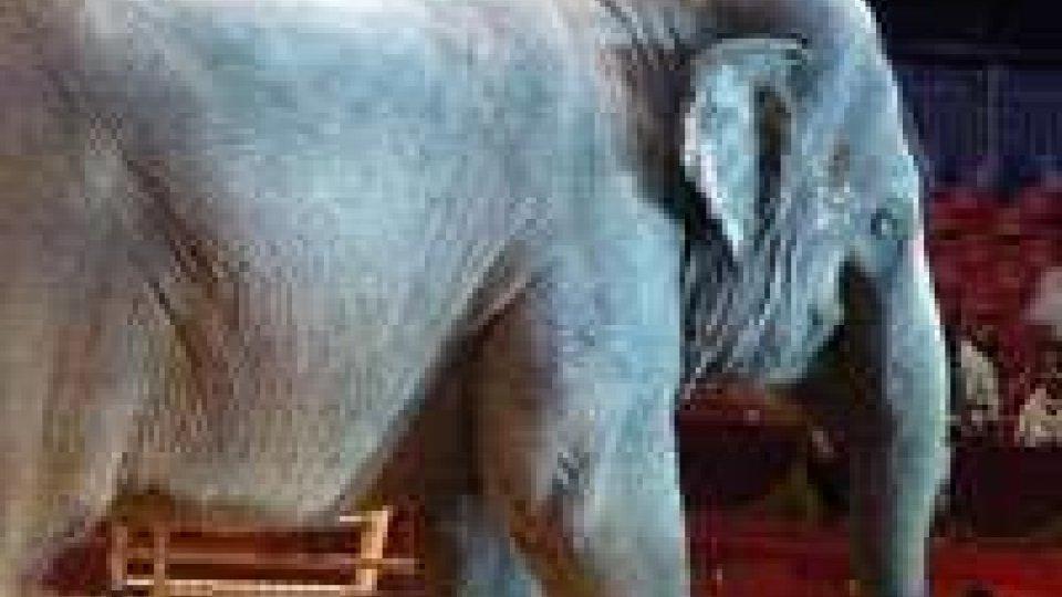 Parigi: elefante scappa da circo e uccide un anziano.