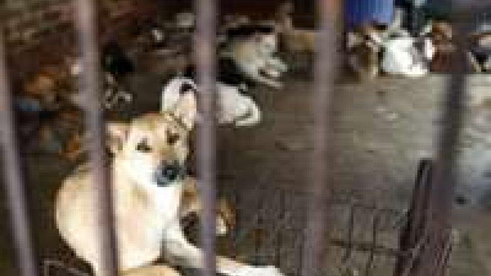 Cina: festival carne di cane, animalisti protestano invano