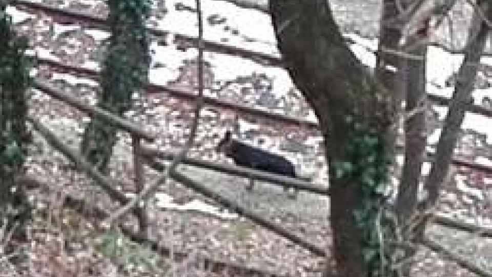 Cane vagante[VIDEO] Cane vagante in Città, segnalato sul percorso della vecchia ferrovia