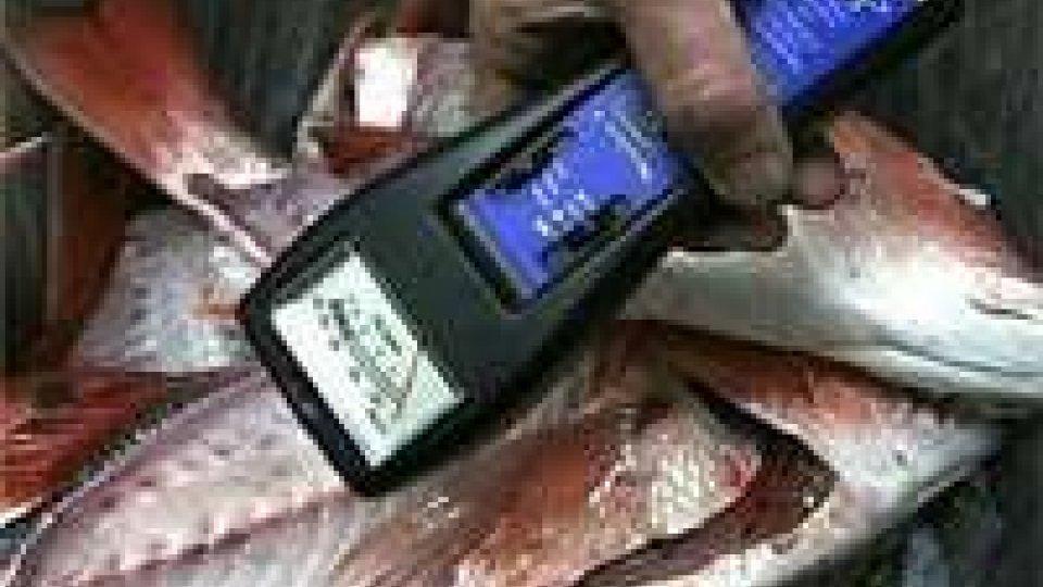 Fukushima: Corea del nord mette al bando prodotti ittici