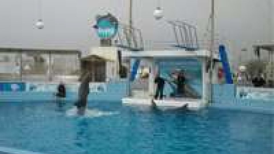Il delfinario di Rimini non riaprirà