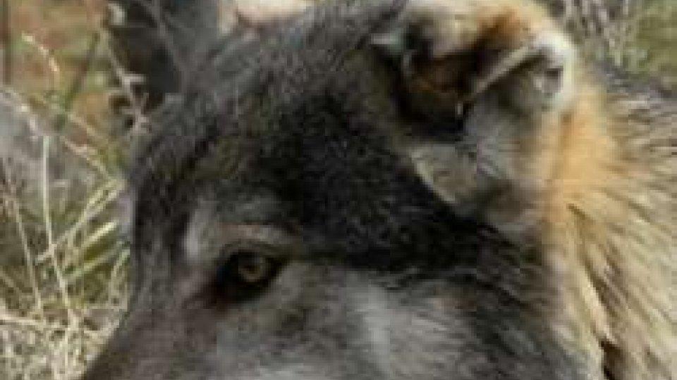Emilia-Romagna: rimborsi fino al 100% per i danni da fauna selvatica all'agricolturaEmilia-Romagna: rimborsi fino al 100% per i danni da fauna selvatica all'agricoltura