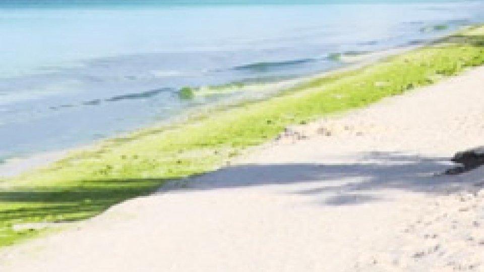 Isola di BoràcayFilippine: chiusa per 6 mesi l'isola di Boràcay per migliorare impianti fognari