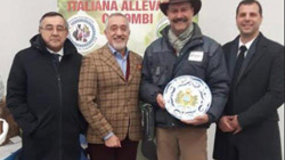 Reggio Emilia: esposto per la prima volta il colombo CAMPAGNOLO SAMMARINESE