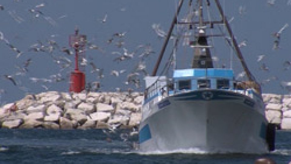 Fermo pescaFermo pesca in Alto Adriatico, soddisfazione da ACI Pesca della Romagna