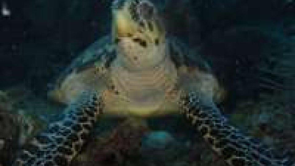 Unibo Ricerca: uno studio globale rivela nuove culle di biodiversità marina