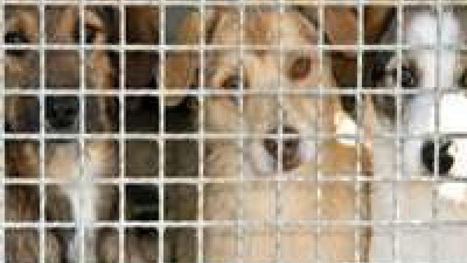 Animali tenuti in pessime condizioni: Apas soddisfatta per la condanna
