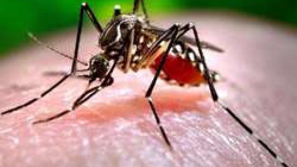 Chikungunya: un nuovo caso anche nelle Marche