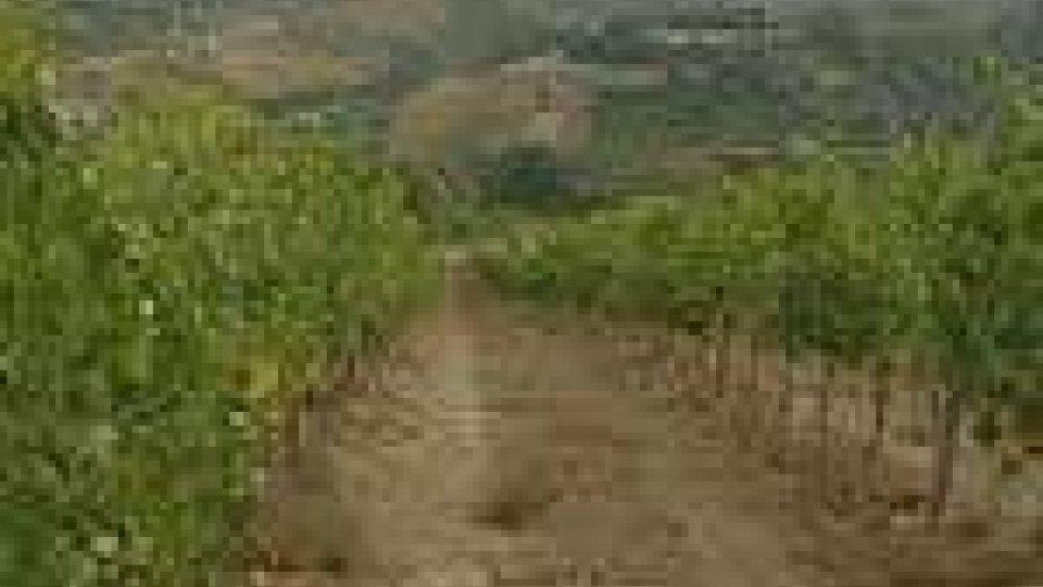 San Marino - Il caldo preoccupa i viticoltori