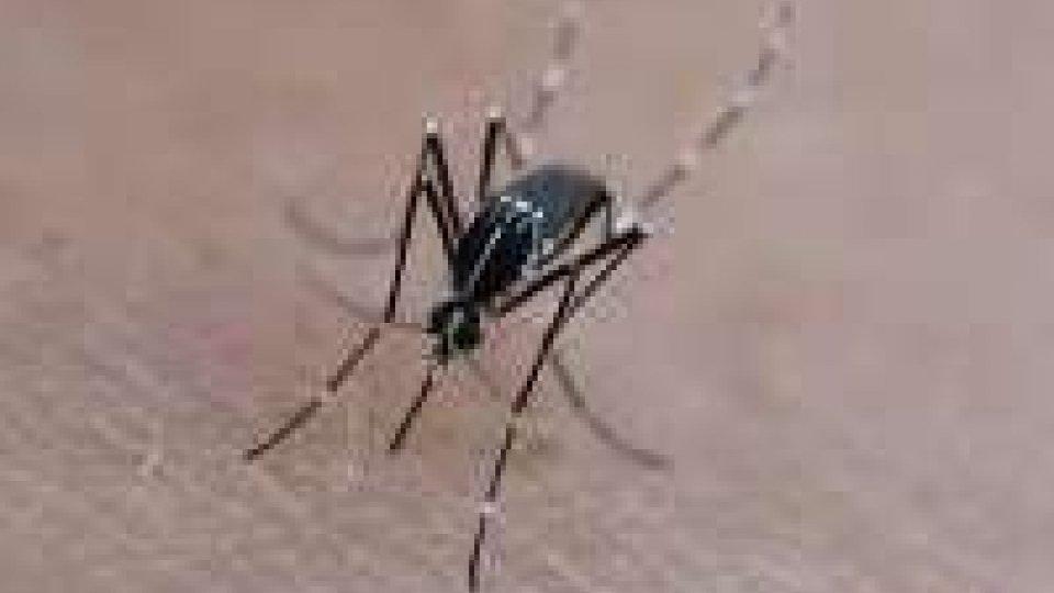 Zanzara tigre: emessa l'ordinanza per la prevenzione