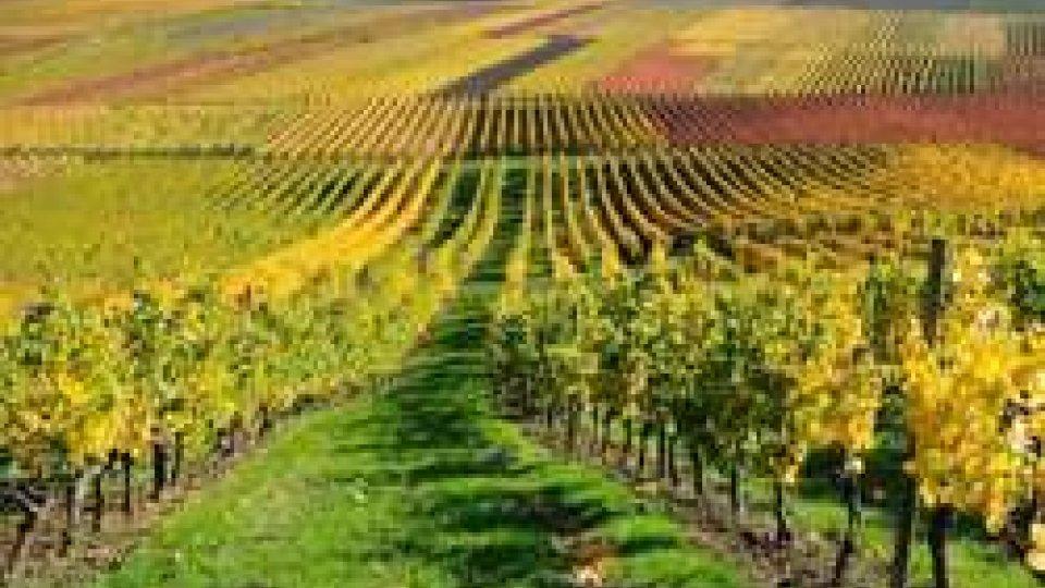 L'Emilia-Romagna sostiene il vino, 6 milioni di euro per la promozione nel mondo