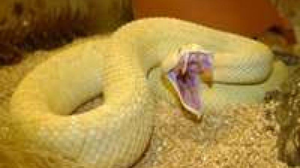 Morso da serpente: in giornata arrivano tutti gli antidotiMorso da serpente: in giornata arrivano tutti gli antidoti