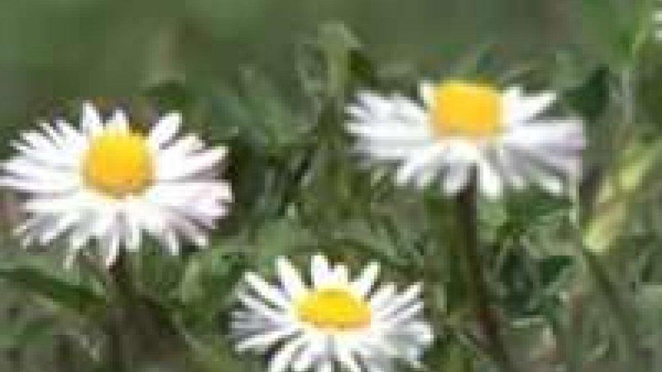 Primavera e picchi di allergie. Un aiuto per conoscerle viene anche dalla RetePrimavera e picchi di allergie. Un aiuto per conoscerle viene anche dalla Rete