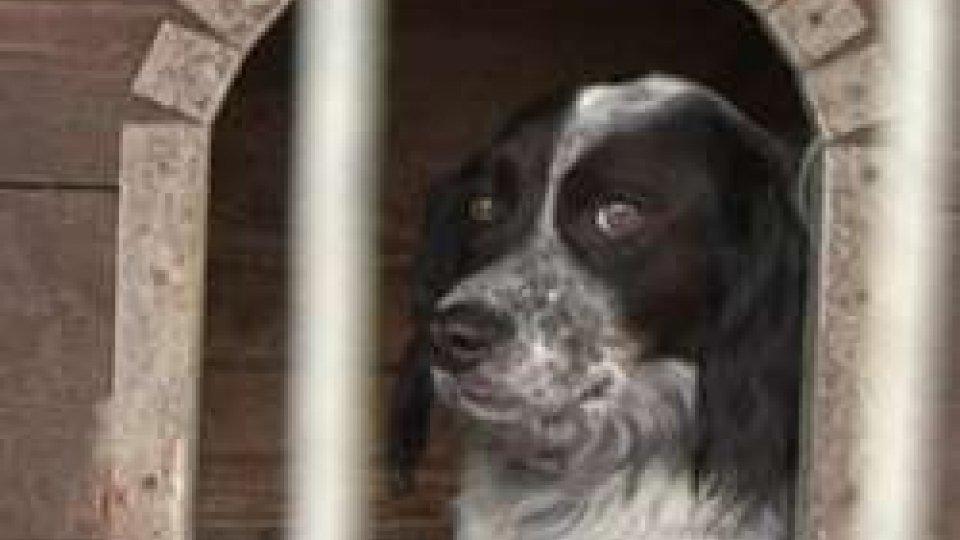 Salute: a San Marino in arrivo un nuovo modo di fare pet therapy