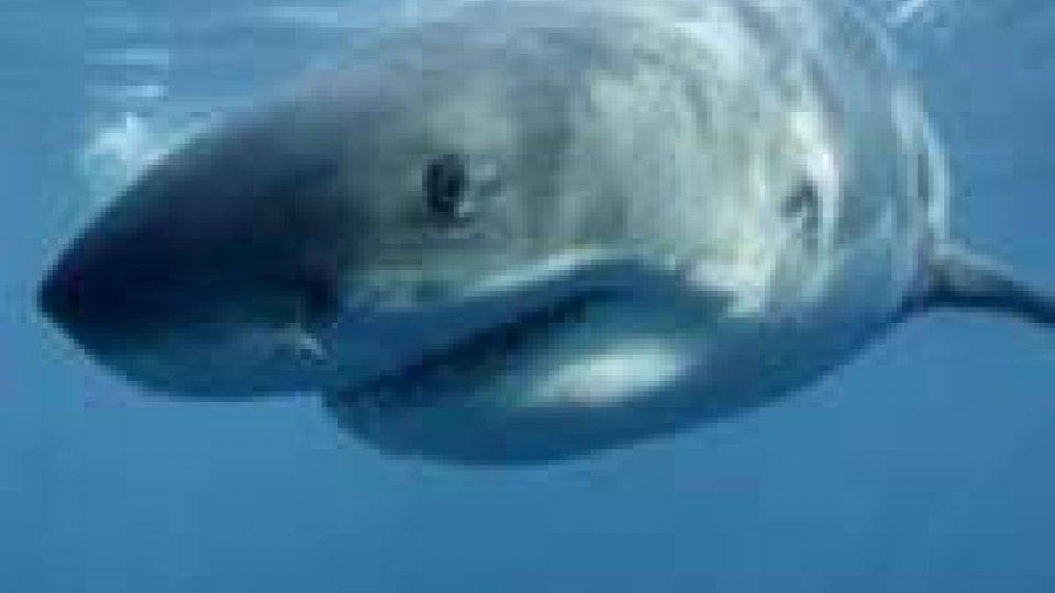 Hawaii: ragazza tedesca morta dopo attacco squalo
