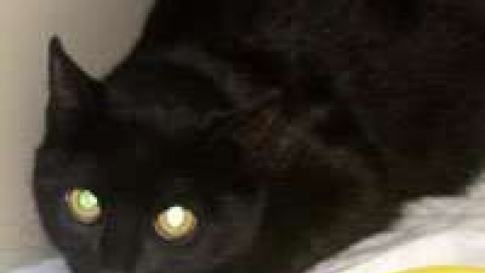 Appello Apas su una gattina investita