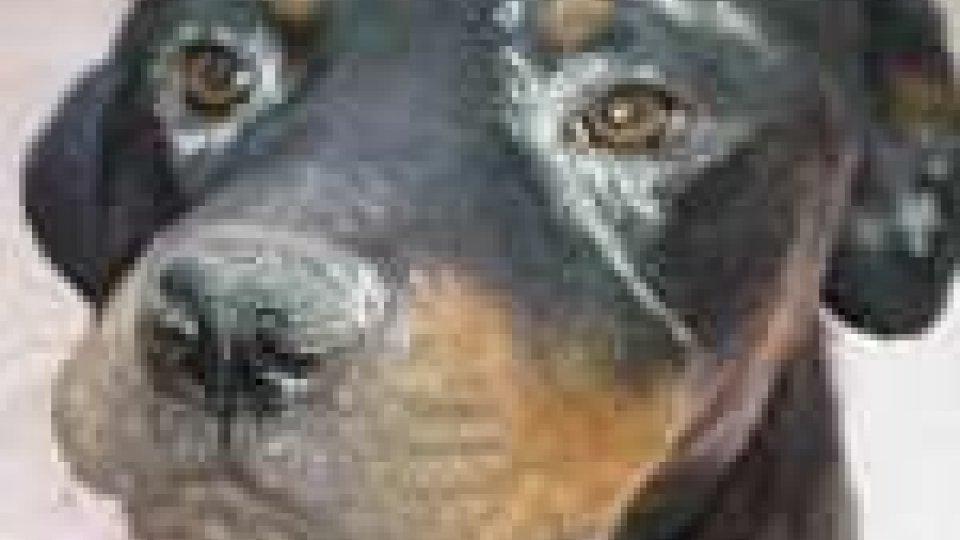 Altri due casi di avvelenamento di cani solo nella giornata di oggi