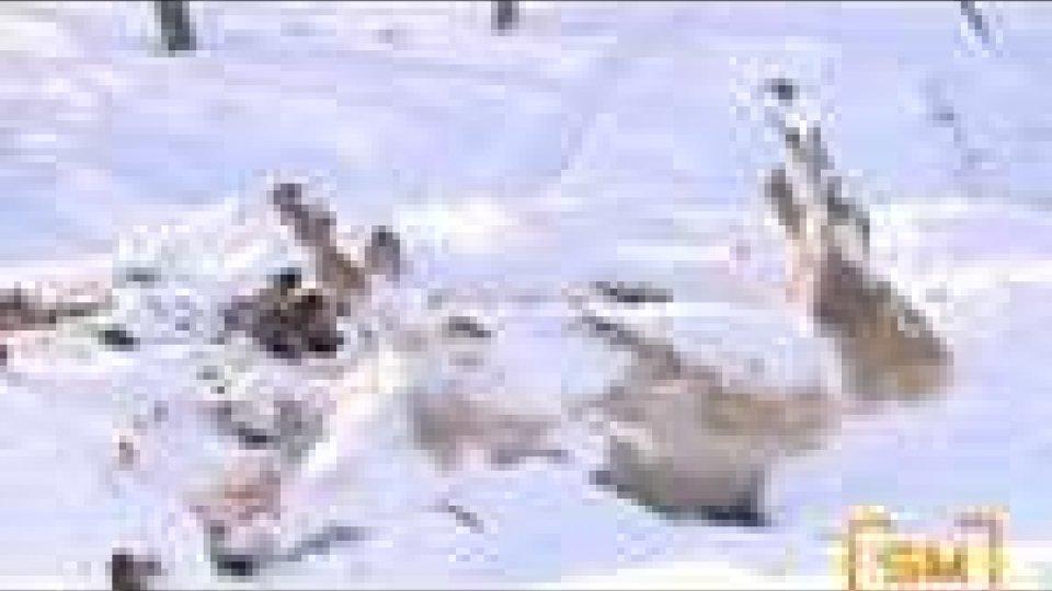 Montetassi e Montealtavelio, due tra i paesi più colpiti dalle intense nevicate