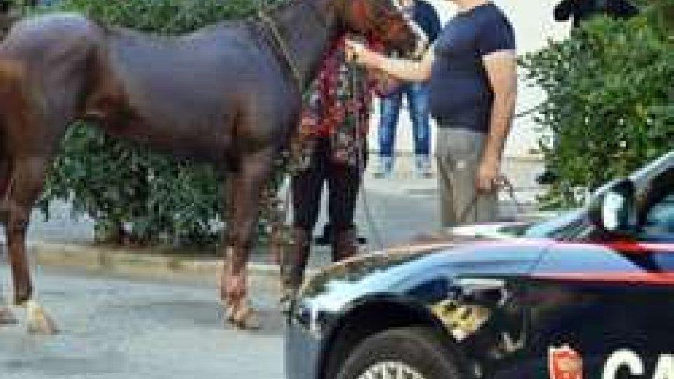 Rimini: cavallo imbizzarrito sul lungomare