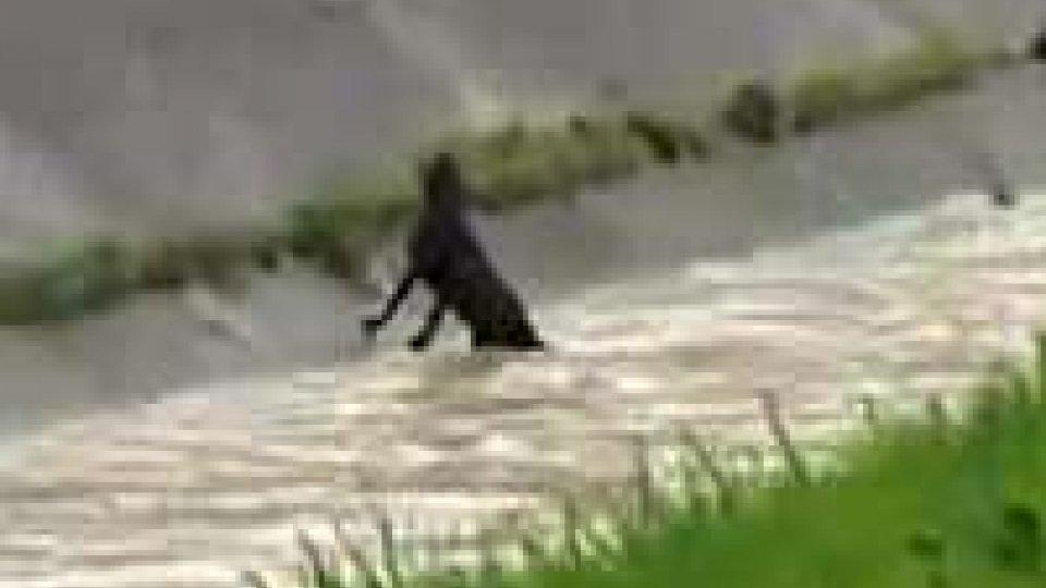 Rimini: cane in un fiume salvato dai Vigili del Fuoco. Immagini esclusiveRimini: cane in un fiume salvato dai Vigili del Fuoco. Immagini esclusive