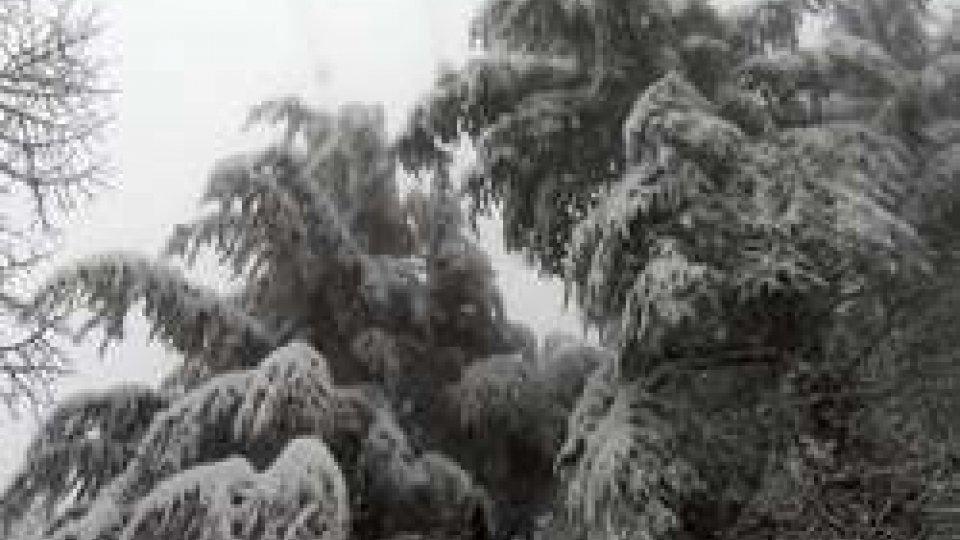 Neve: interventi per liberare strade da rami e alberi, Università sospende lezioni