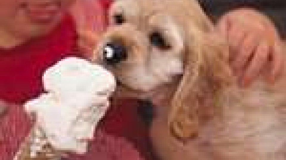 Apas discute di tutela degli animali