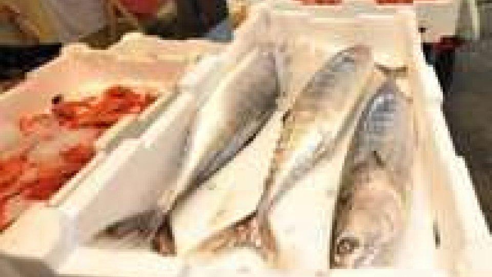 Da oggi stop pesce fresco in tutto Adriatico