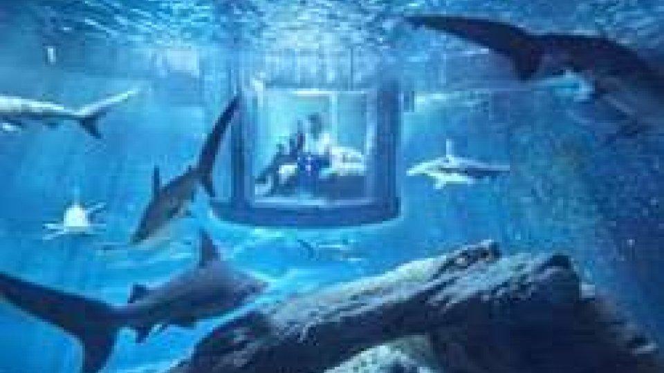 Una notte tra gli squali, la proposta alternativa dell'acquario di Parigi