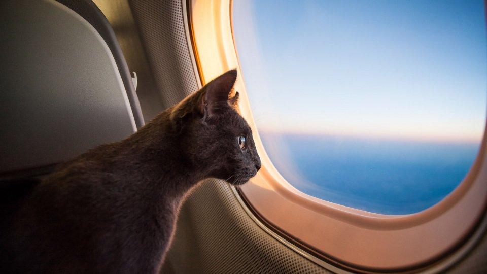 Cani e gatti in aereo