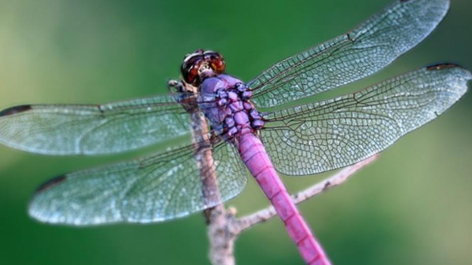 Cosa hanno in comune le donne con le libellule?