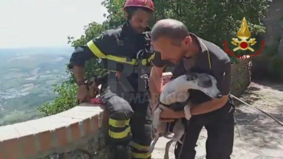 Nel video le immagini del salvataggio