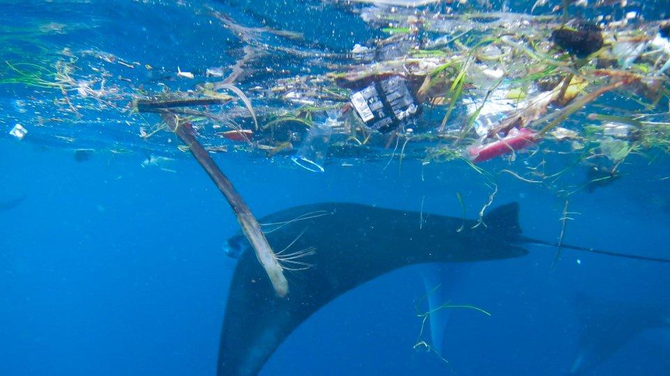 Foto: Marine Megafauna Foundation