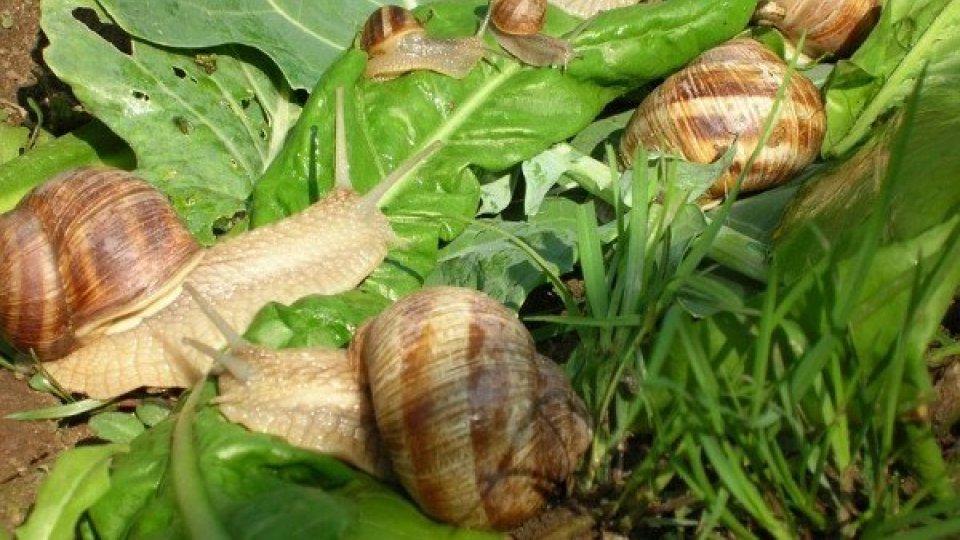 Giornata informativa sull'allevamento delle lumache