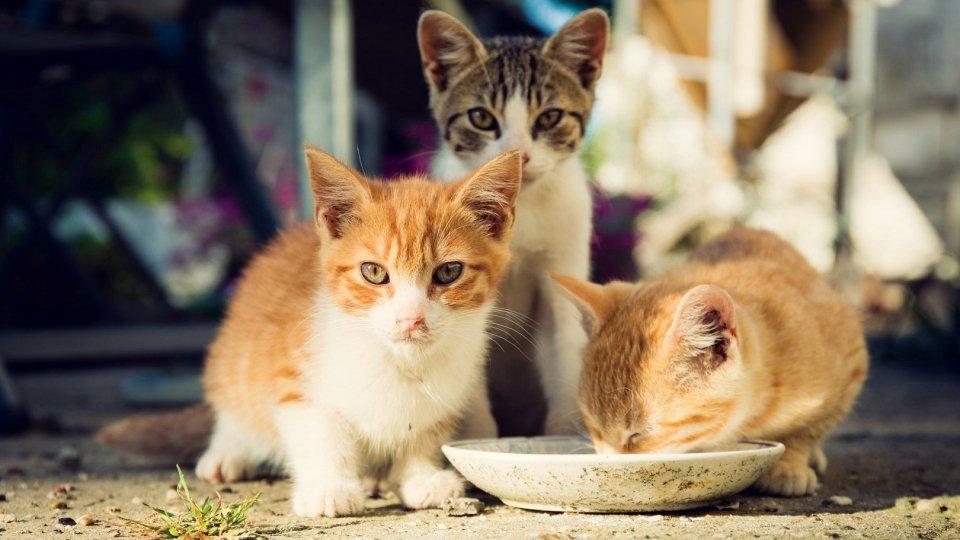 """Nasce l'albo dei """"gattari"""""""
