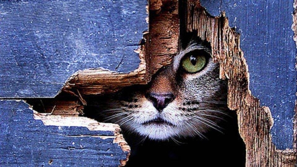I comportamenti del gatto rivelano la personalità del padrone
