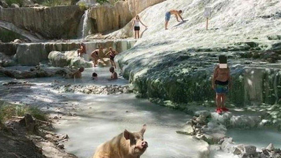 Ferie, si danno a cani e porci