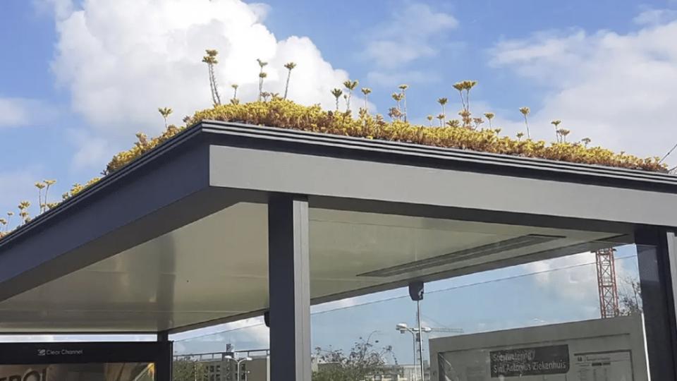L'Olanda aiuta le api
