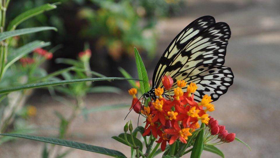 Incontri spesso le farfalle?