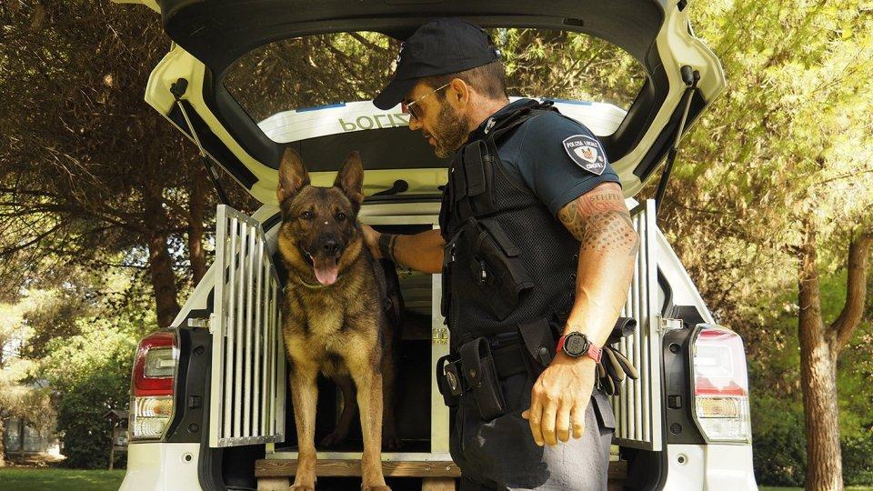 Operazione antidroga della Polizia con l'ausilio di Bruce e Iago dell'Unità Cinofila