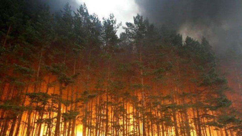 Siberia: 2,8 milioni di ettari di bosco distrutti dai violenti incendi degli ultimi giorni