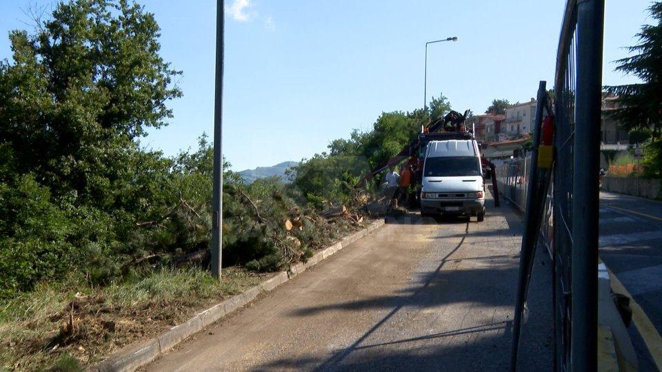 L'abbattimento degli alberi a MurataAlcune immagini dei lavori a Murata